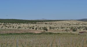 castro verde SpA.14 south of alvares